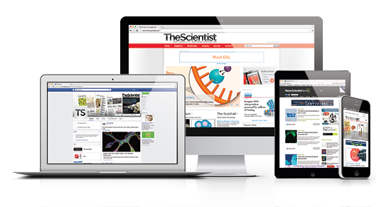 The Scientist shown on a variety of devices (web, tablet, mobile)